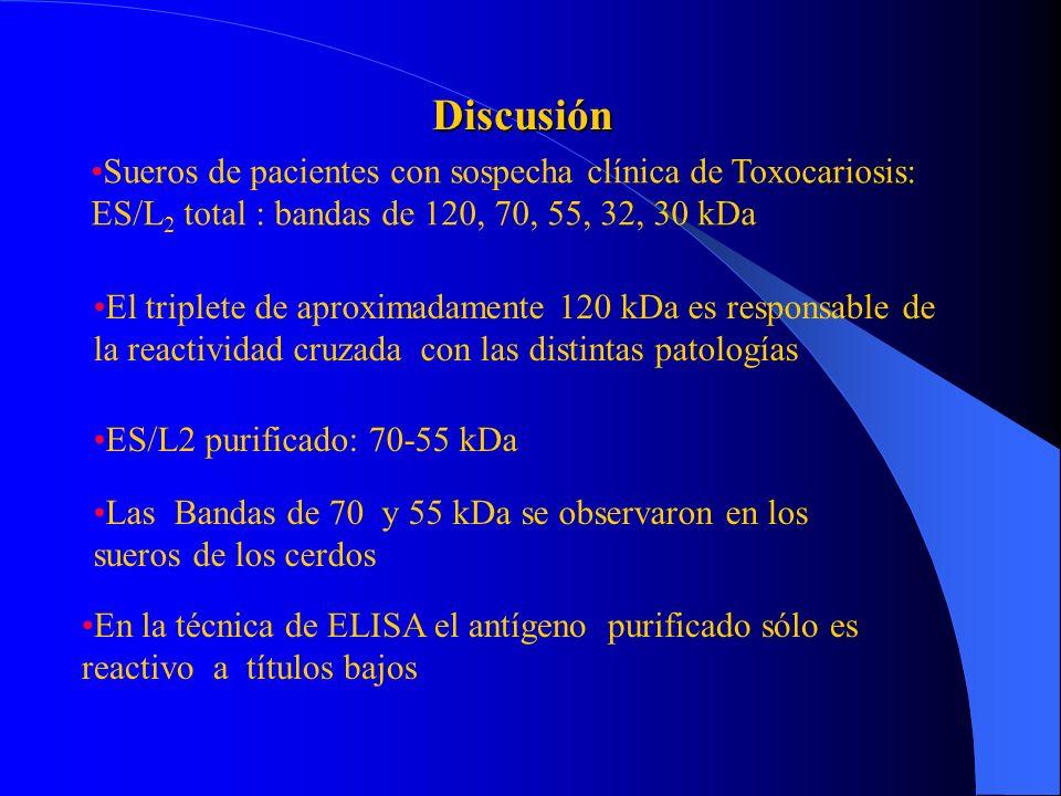 Sensibilidad y Especificidad del ELISA con antígeno ES/L 2 total y purificado de T. canis