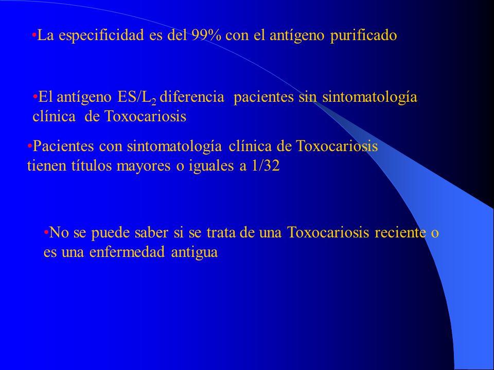 Discusión El triplete de aproximadamente 120 kDa es responsable de la reactividad cruzada con las distintas patologías ES/L2 purificado: 70-55 kDa En la técnica de ELISA el antígeno purificado sólo es reactivo a títulos bajos Sueros de pacientes con sospecha clínica de Toxocariosis: ES/L 2 total : bandas de 120, 70, 55, 32, 30 kDa Las Bandas de 70 y 55 kDa se observaron en los sueros de los cerdos
