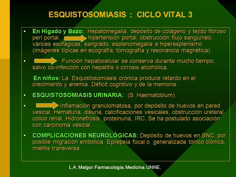 L.A. Malgor. Farmacología. Medicina. UNNE. ESQUISTOSOMIASIS : CICLO VITAL 3 Hepatomegalia, depósito de colágeno y tejido fibroso peri portal, hiperten