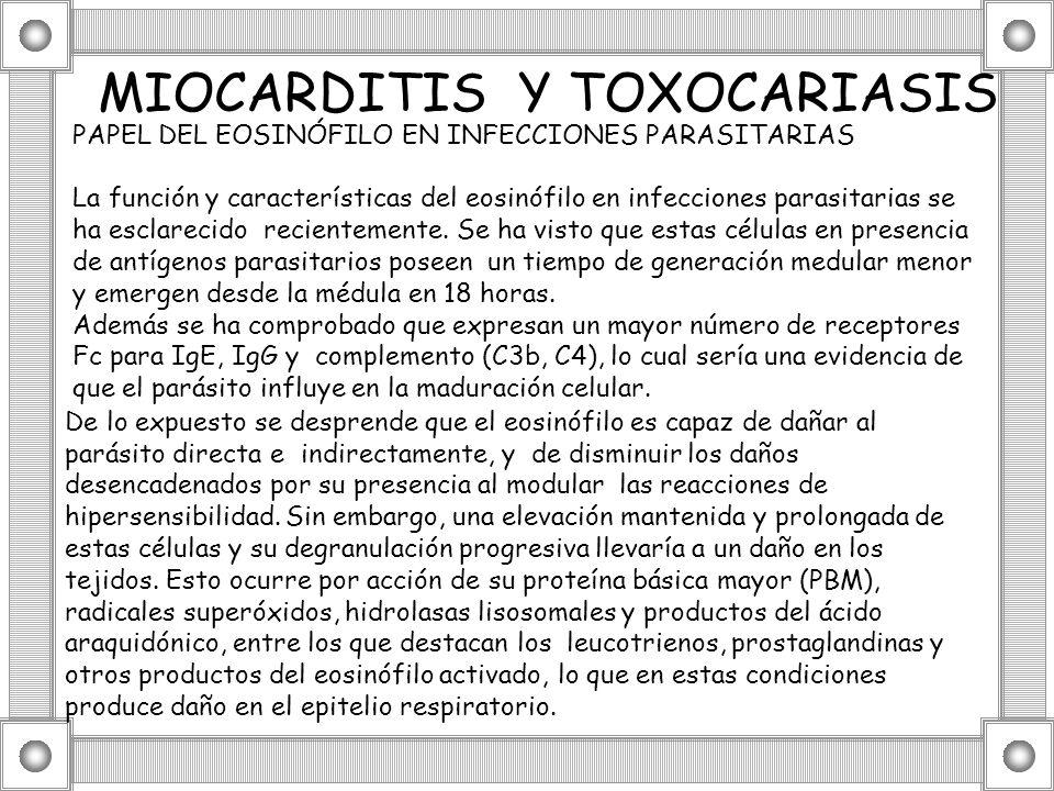 MIOCARDITIS Y TOXOCARIASIS PAPEL DEL EOSINÓFILO EN INFECCIONES PARASITARIAS La función y características del eosinófilo en infecciones parasitarias se