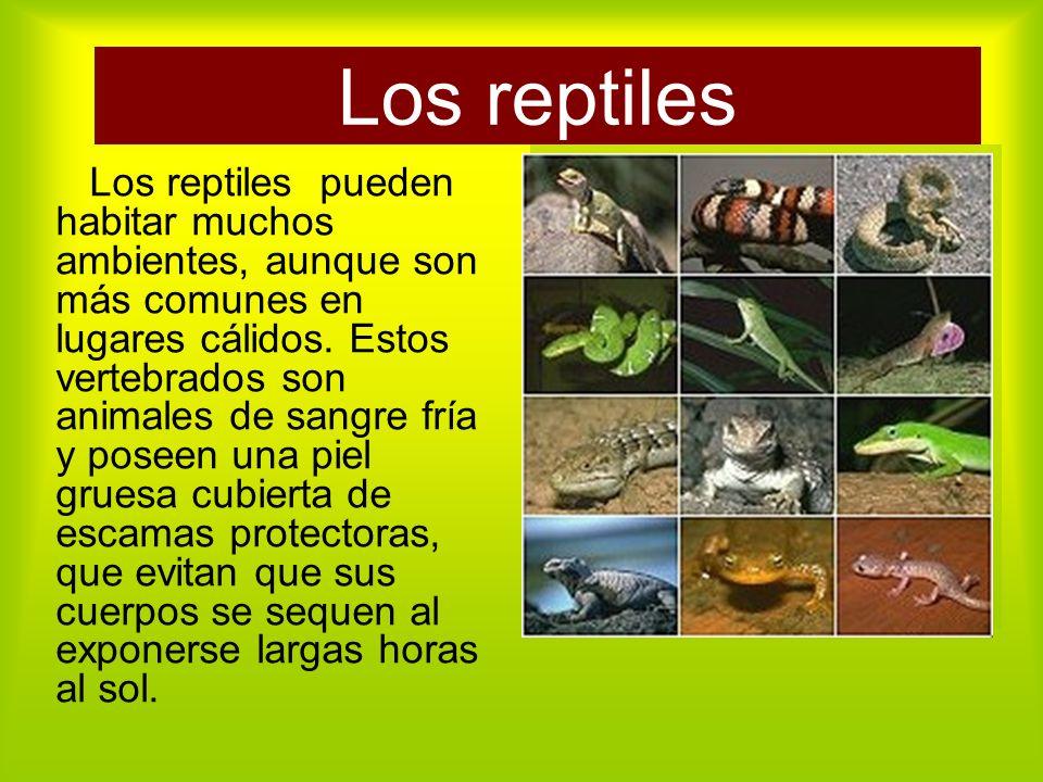Los reptiles Los reptiles pueden habitar muchos ambientes, aunque son más comunes en lugares cálidos.