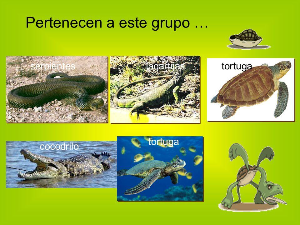Pertenecen a este grupo … serpienteslagartijastortuga cocodrilo tortuga