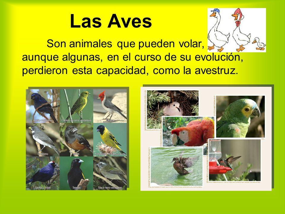 Las Aves Son animales que pueden volar, aunque algunas, en el curso de su evolución, perdieron esta capacidad, como la avestruz.