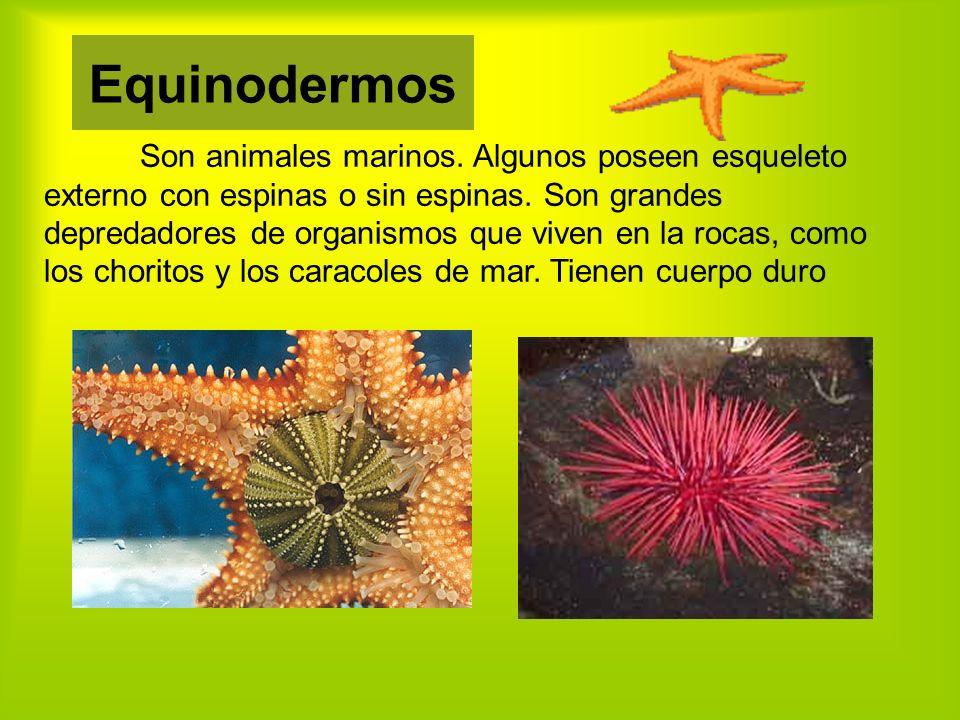 Son animales marinos.Algunos poseen esqueleto externo con espinas o sin espinas.