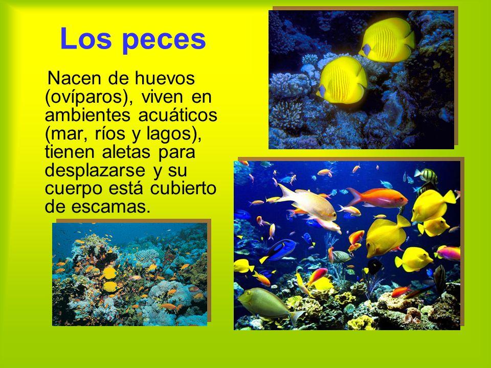 Los peces Nacen de huevos (ovíparos), viven en ambientes acuáticos (mar, ríos y lagos), tienen aletas para desplazarse y su cuerpo está cubierto de escamas.