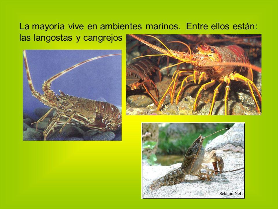 La mayoría vive en ambientes marinos. Entre ellos están: las langostas y cangrejos