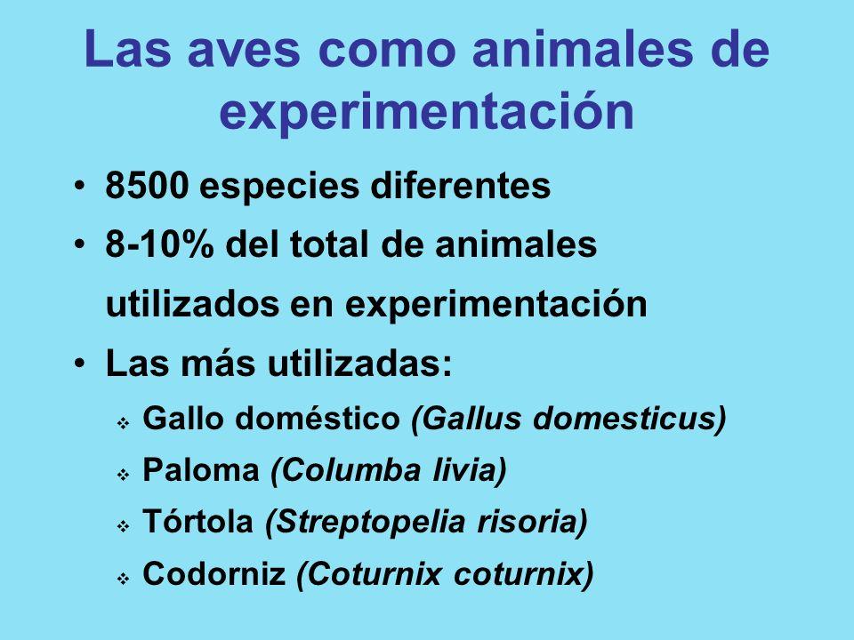 Las aves como animales de experimentación 8500 especies diferentes 8-10% del total de animales utilizados en experimentación Las más utilizadas: Gallo