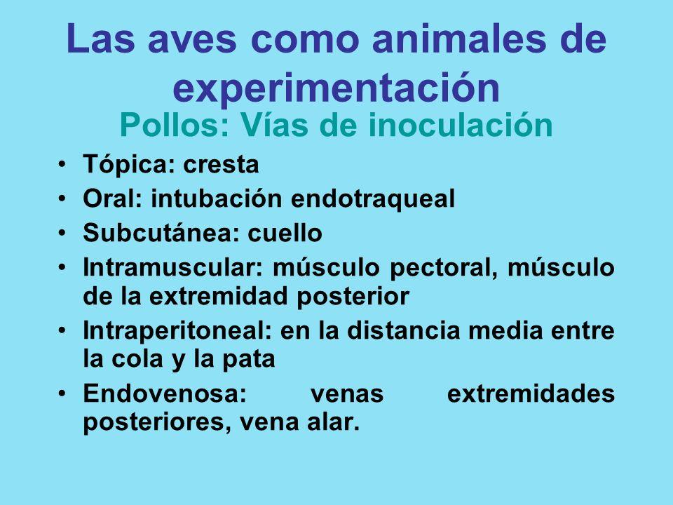 Las aves como animales de experimentación Pollos: Vías de inoculación Tópica: cresta Oral: intubación endotraqueal Subcutánea: cuello Intramuscular: m