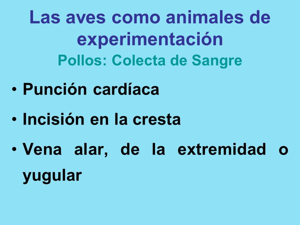 Las aves como animales de experimentación Pollos: Colecta de Sangre Punción cardíaca Incisión en la cresta Vena alar, de la extremidad o yugular