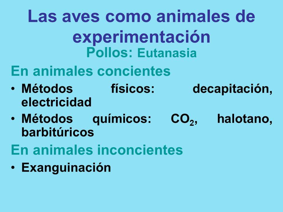 Las aves como animales de experimentación Pollos: Eutanasia En animales concientes Métodos físicos: decapitación, electricidad Métodos químicos: CO 2,
