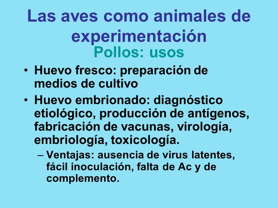 Las aves como animales de experimentación Pollos: usos Huevo fresco: preparación de medios de cultivo Huevo embrionado: diagnóstico etiológico, produc