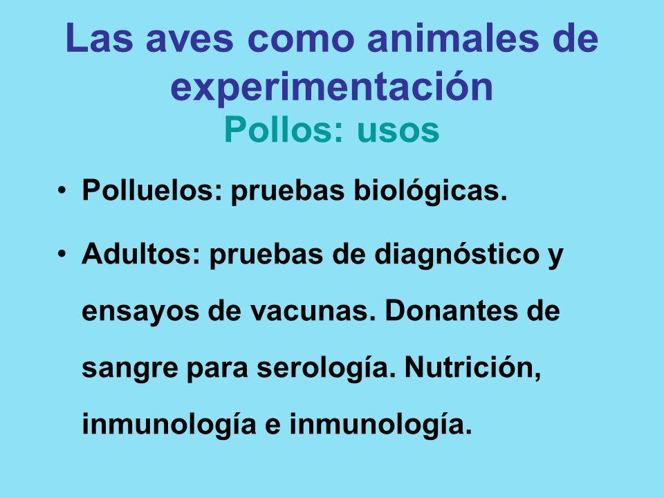 Las aves como animales de experimentación Pollos: usos Polluelos: pruebas biológicas. Adultos: pruebas de diagnóstico y ensayos de vacunas. Donantes d