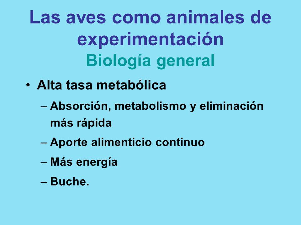Las aves como animales de experimentación Biología general Alta tasa metabólica –Absorción, metabolismo y eliminación más rápida –Aporte alimenticio c