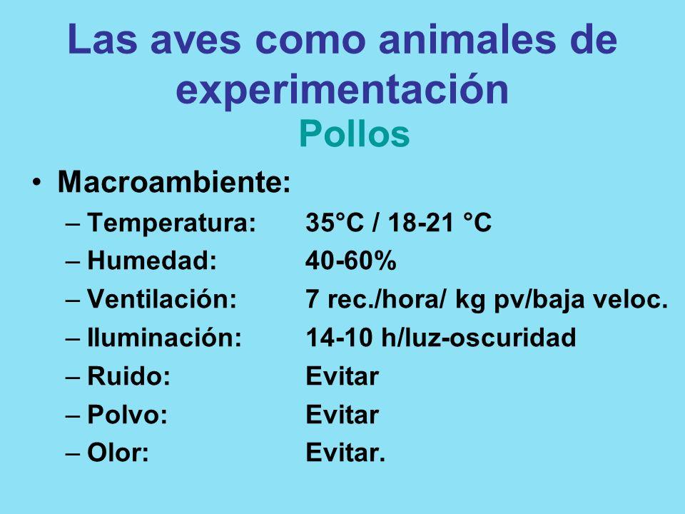 Las aves como animales de experimentación Pollos Macroambiente: –Temperatura:35°C / 18-21 °C –Humedad:40-60% –Ventilación:7 rec./hora/ kg pv/baja velo