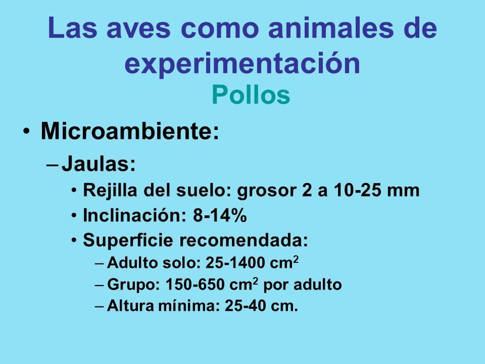 Las aves como animales de experimentación Pollos Microambiente: –Jaulas: Rejilla del suelo: grosor 2 a 10-25 mm Inclinación: 8-14% Superficie recomend