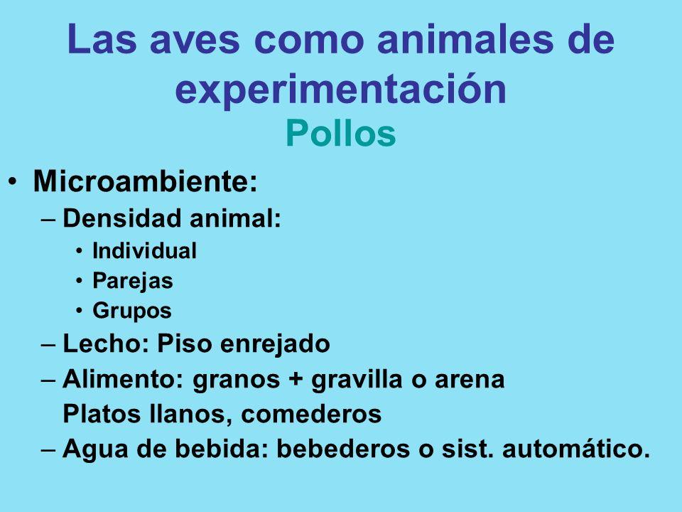 Las aves como animales de experimentación Pollos Microambiente: –Densidad animal: Individual Parejas Grupos –Lecho: Piso enrejado –Alimento: granos +