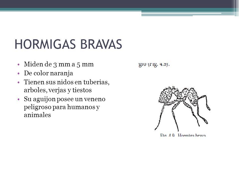 HORMIGAS BRAVAS Miden de 3 mm a 5 mm De color naranja Tienen sus nidos en tuberias, arboles, verjas y tiestos Su aguijon posee un veneno peligroso par