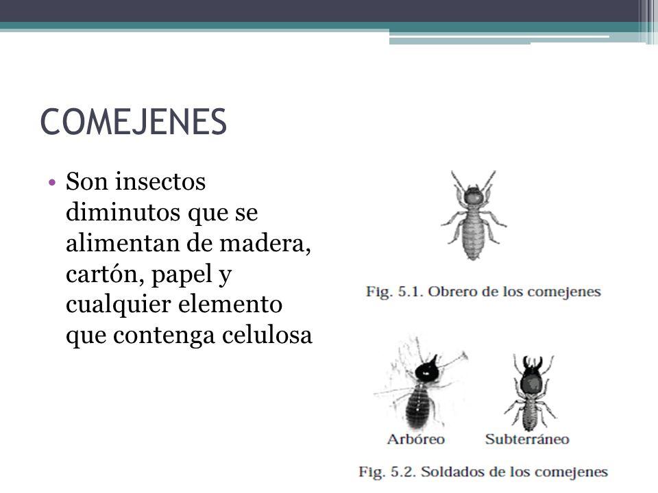 COMEJENES Son insectos diminutos que se alimentan de madera, cartón, papel y cualquier elemento que contenga celulosa