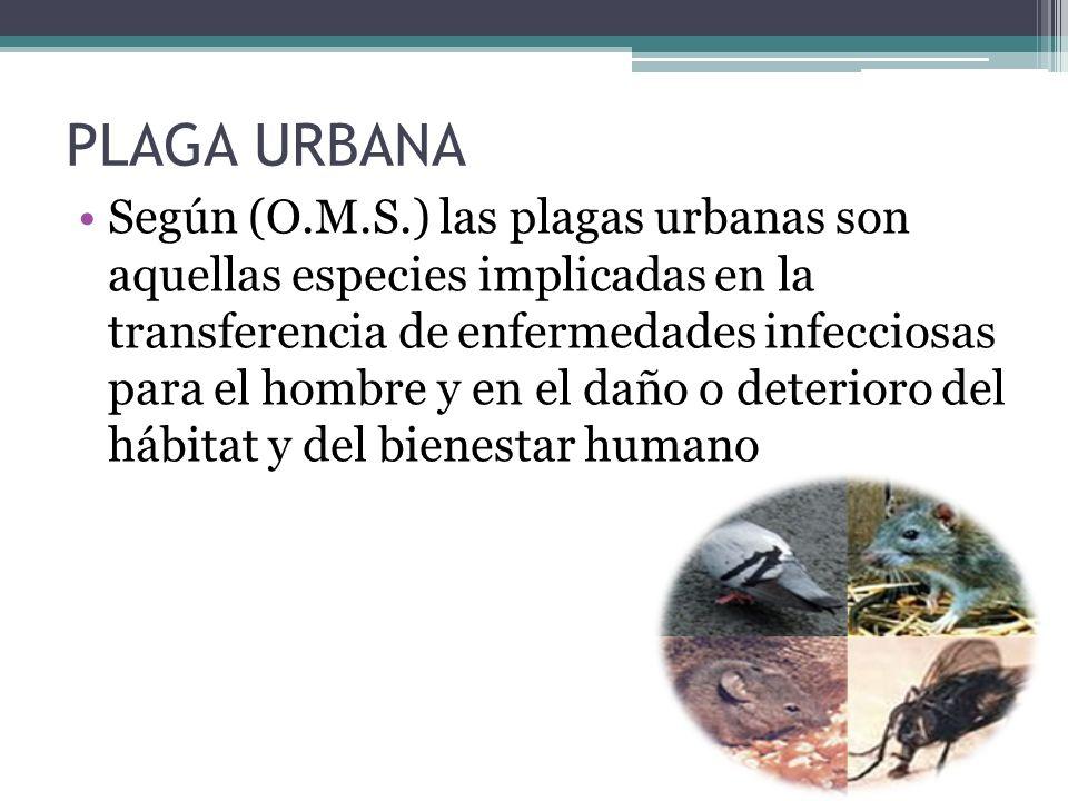 PLAGA URBANA Según (O.M.S.) las plagas urbanas son aquellas especies implicadas en la transferencia de enfermedades infecciosas para el hombre y en el