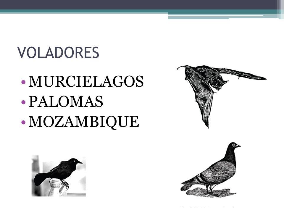 VOLADORES MURCIELAGOS PALOMAS MOZAMBIQUE