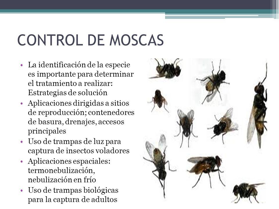 CONTROL DE MOSCAS La identificación de la especie es importante para determinar el tratamiento a realizar: Estrategias de solución Aplicaciones dirigi