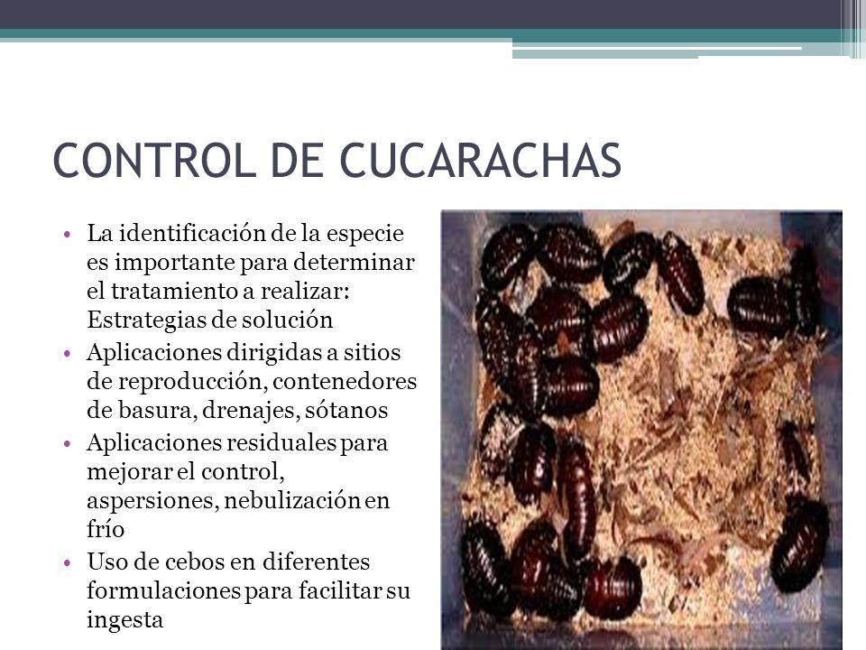 CONTROL DE CUCARACHAS La identificación de la especie es importante para determinar el tratamiento a realizar: Estrategias de solución Aplicaciones di