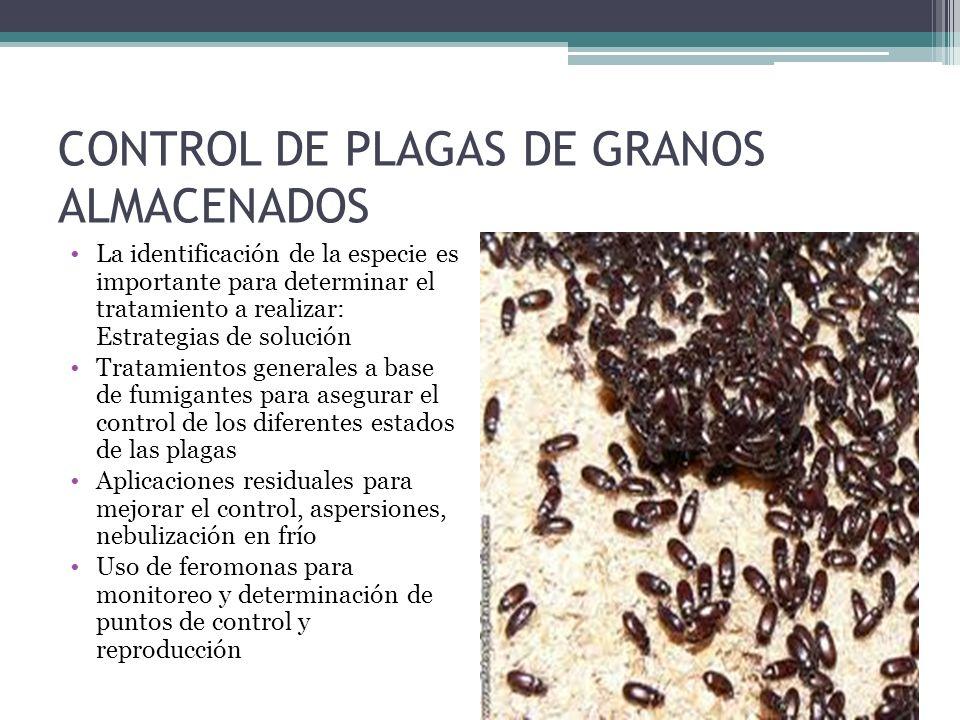 CONTROL DE PLAGAS DE GRANOS ALMACENADOS La identificación de la especie es importante para determinar el tratamiento a realizar: Estrategias de soluci