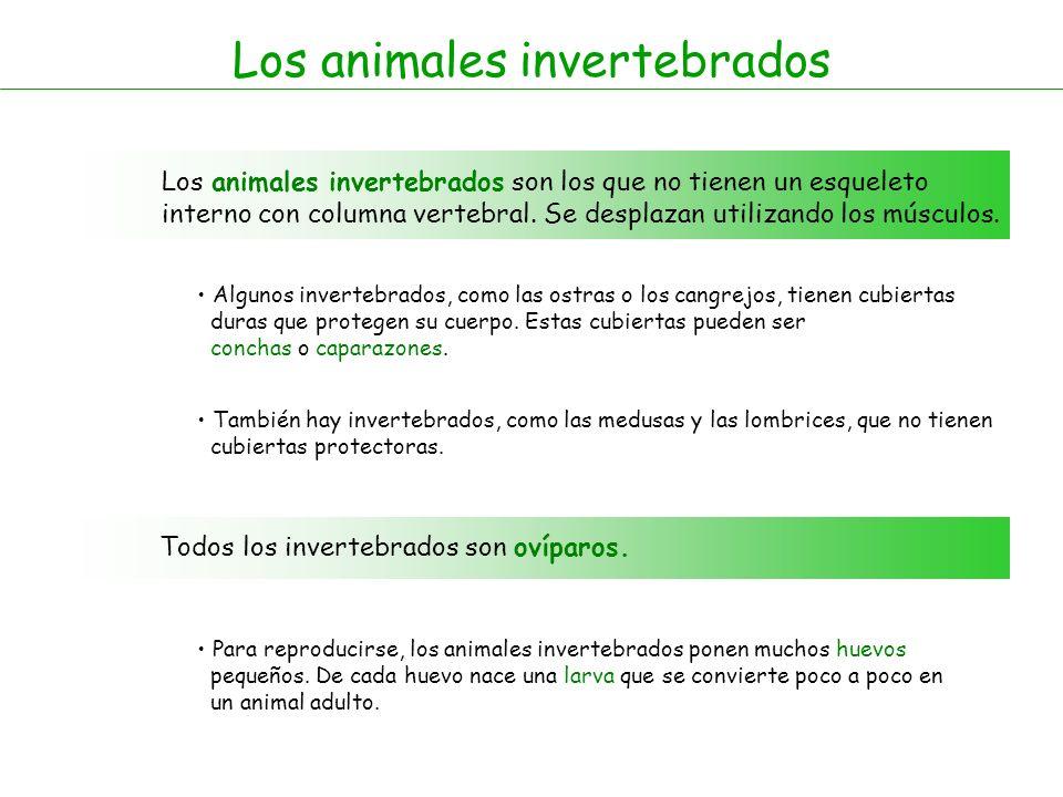 Los animales invertebrados Los animales invertebrados son los que no tienen un esqueleto interno con columna vertebral.