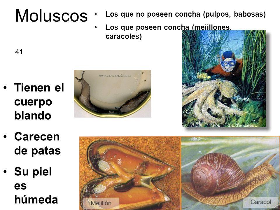 Moluscos Los que no poseen concha (pulpos, babosas) Los que poseen concha (mejillones, caracoles) Tienen el cuerpo blando Carecen de patas Su piel es húmeda 41