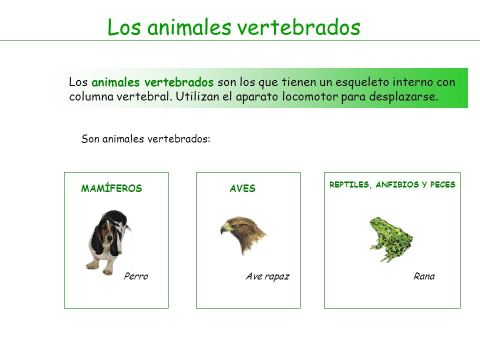 Los mamíferos Los mamíferos son animales vertebrados, son vivíparos, y se alimentan de leche materna cuando acaban de nacer.