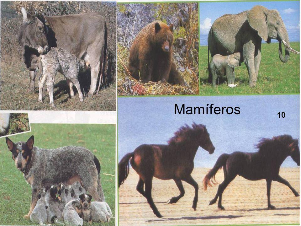 CARACTERÍSTICAS GENERALES Forman el grupo más numeroso de animales, después de los insectos.