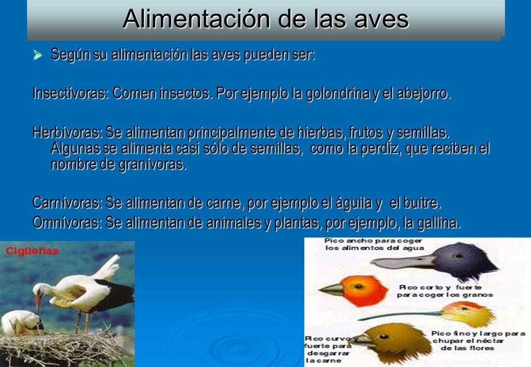 17 Alimentación de las aves Según su alimentación las aves pueden ser: Según su alimentación las aves pueden ser: Insectívoras: Comen insectos. Por ej