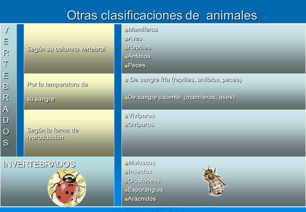 2 Otras clasificaciones de animales VERTEBRADOS Según su columna vertebral MamíferosAvesReptilesAnfibiosPeces Por la temperatura de su sangre De sangr