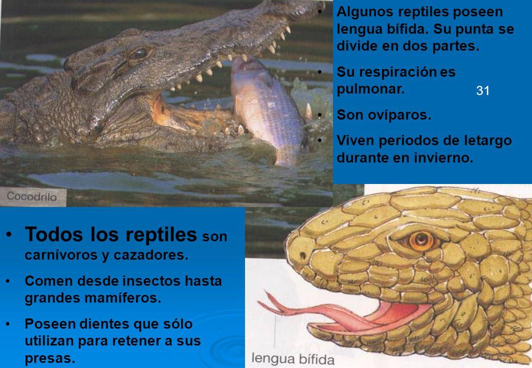 27 Todos los reptiles son carnívoros y cazadores. Comen desde insectos hasta grandes mamíferos. Poseen dientes que sólo utilizan para retener a sus pr