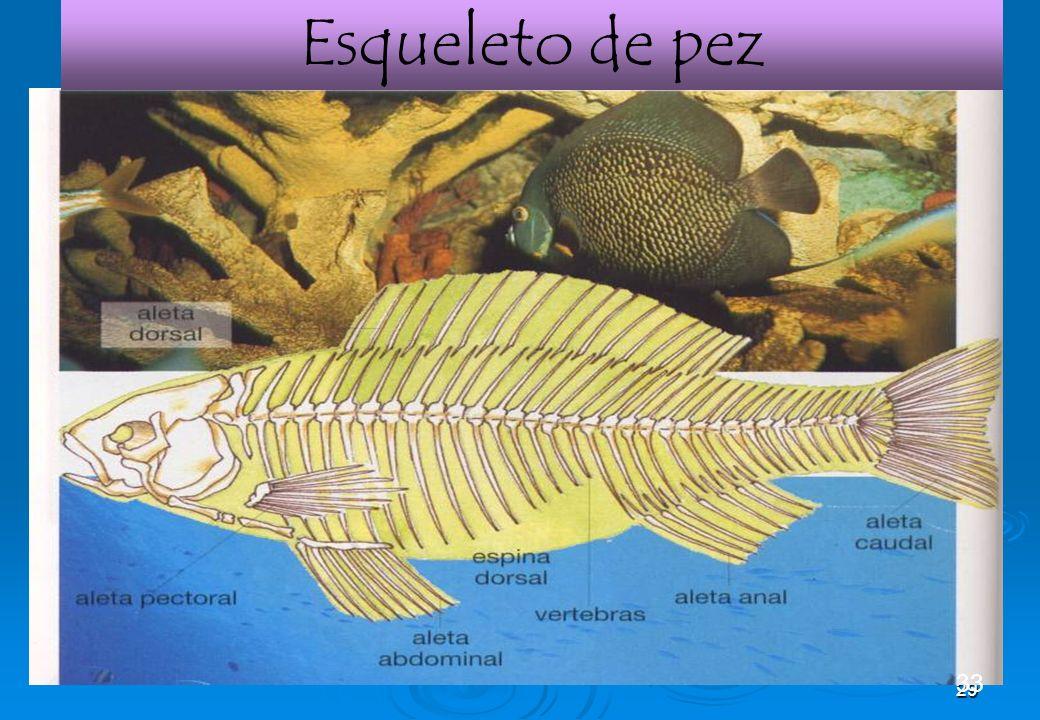 29 Esqueleto de pez 33