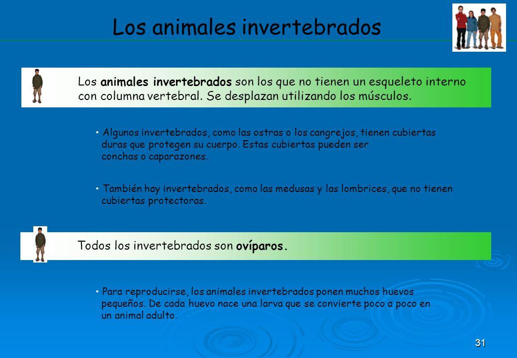 31 Los animales invertebrados Los animales invertebrados son los que no tienen un esqueleto interno con columna vertebral. Se desplazan utilizando los