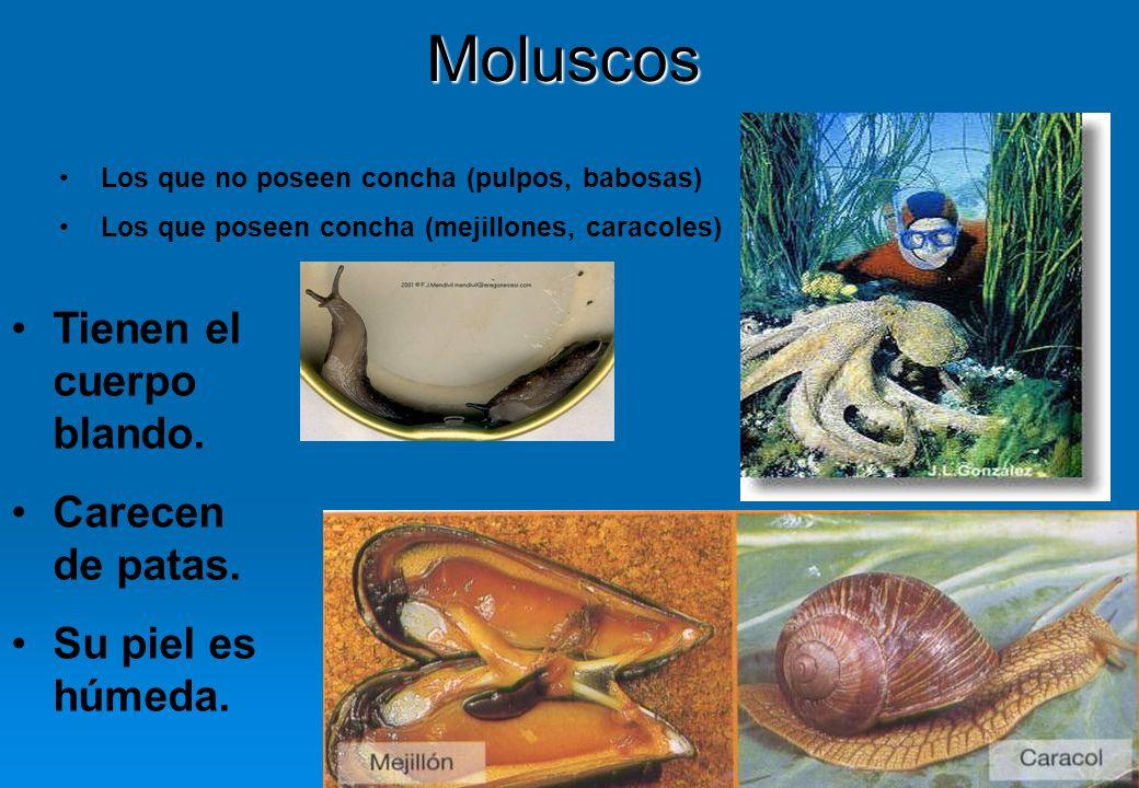 38Moluscos Los que no poseen concha (pulpos, babosas) Los que poseen concha (mejillones, caracoles) Tienen el cuerpo blando. Carecen de patas. Su piel