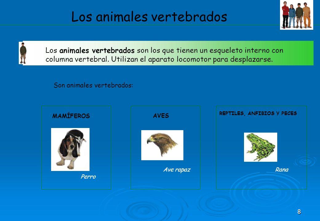 8 Los animales vertebrados Los animales vertebrados son los que tienen un esqueleto interno con columna vertebral. Utilizan el aparato locomotor para
