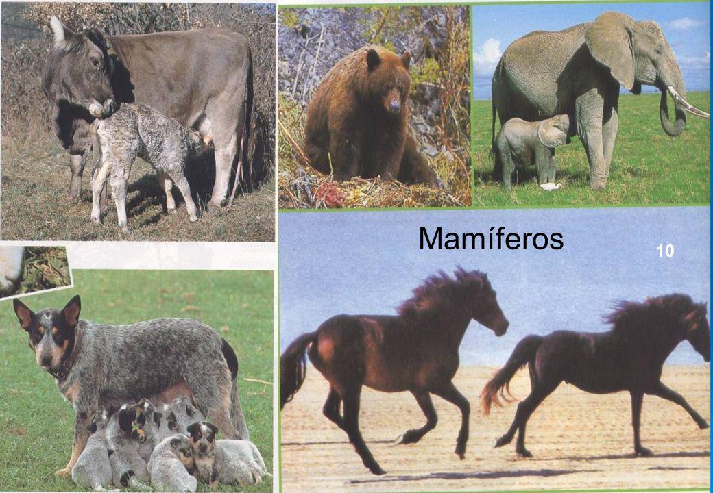 9 Mamíferos 10