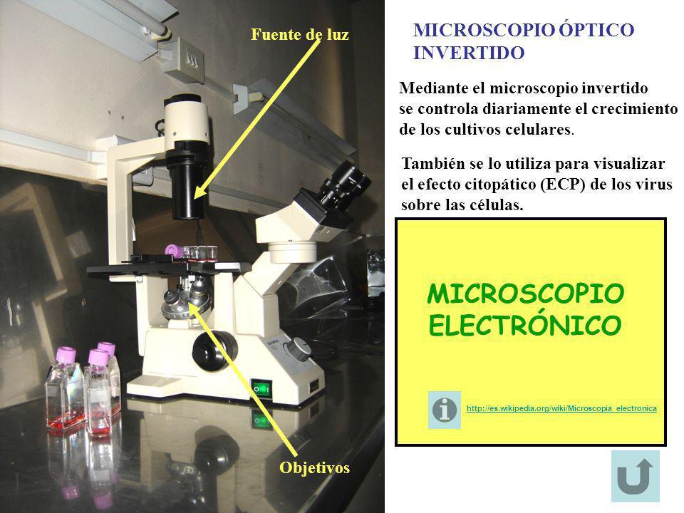 MICROSCOPIO ÓPTICO INVERTIDO Fuente de luz Objetivos Mediante el microscopio invertido se controla diariamente el crecimiento de los cultivos celulare