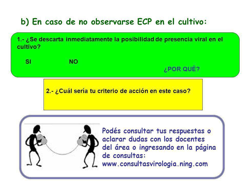 b) En caso de no observarse ECP en el cultivo: 2.- ¿Cuál sería tu criterio de acción en este caso? Podés consultar tus respuestas o aclarar dudas con