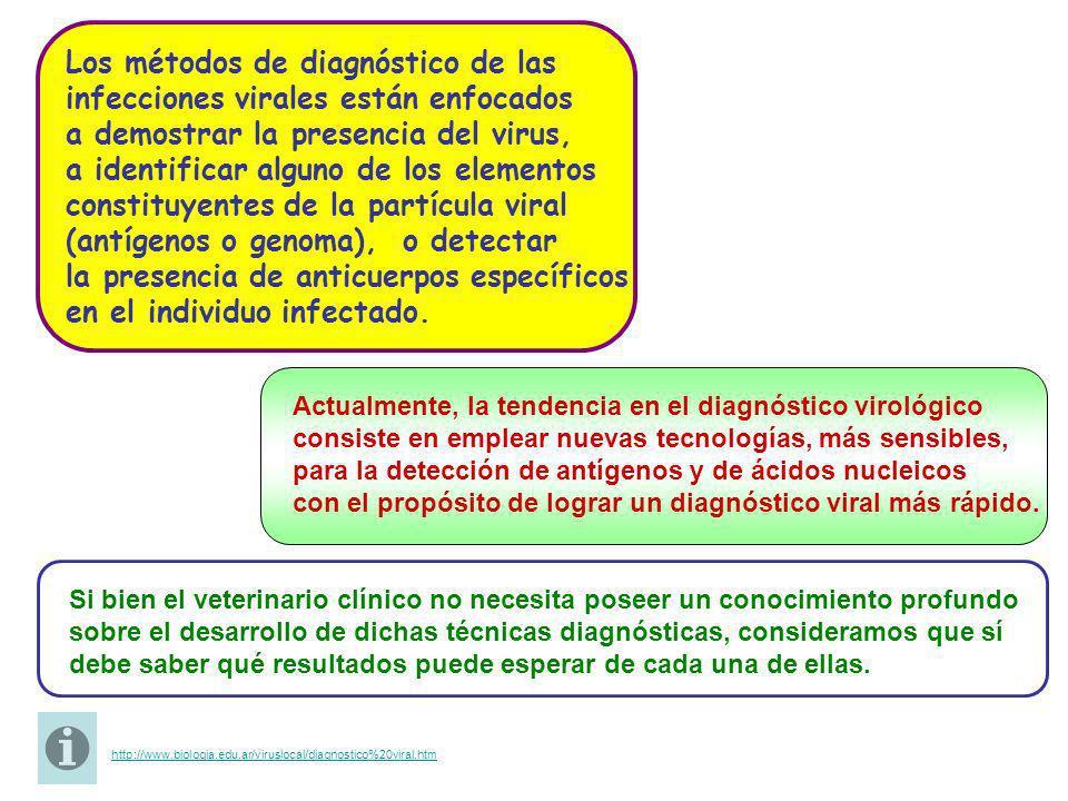 CONOZCAS DISTINTAS METODOLOGÍAS PARA EL DIAGNÓSTICO DE INFECCIONES VIRALES.
