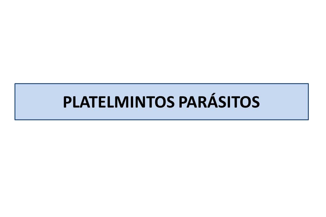 Consumiendo alimentos contaminados con huevos embrionados de un individuo infectado con Tenia adulta en su intestino Los huevos embrionado al ser ingeridos se transforman en el estómago en la forma larvaria llamada cisticerco que se alojará en los músculos Consumiendo alimentos contaminados con huevos embrionados de un individuo infectado con Tenia adulta en su intestino Los huevos embrionado al ser ingeridos se transforman en el estómago en la forma larvaria llamada cisticerco que se alojará en los músculos