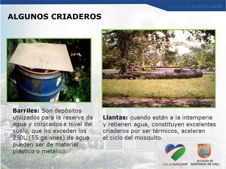 Barriles: Son depósitos utilizados para la reserva de agua y colocados a nivel del suelo, que no exceden los 250L (55 galones) de agua pueden ser de m
