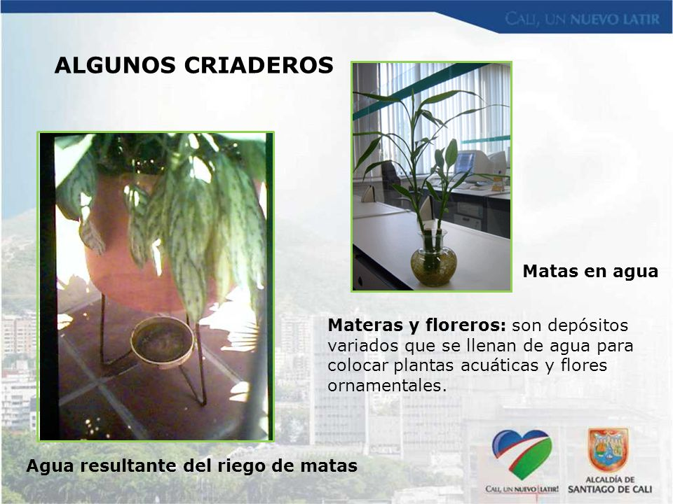 Agua resultante del riego de matas Matas en agua Materas y floreros: son depósitos variados que se llenan de agua para colocar plantas acuáticas y flo