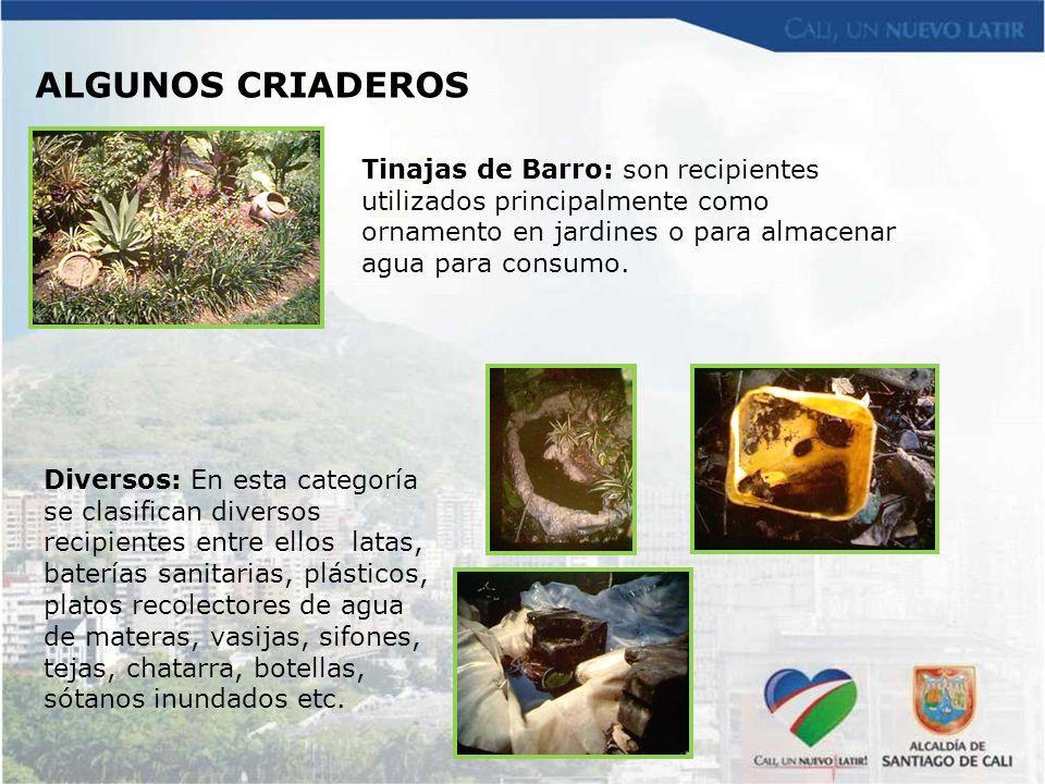 Tinajas de Barro: son recipientes utilizados principalmente como ornamento en jardines o para almacenar agua para consumo. Diversos: En esta categoría