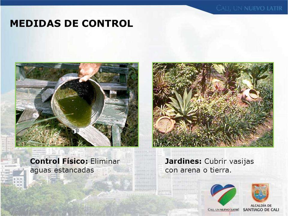 MEDIDAS DE CONTROL Jardines: Cubrir vasijas con arena o tierra. Control Físico: Eliminar aguas estancadas