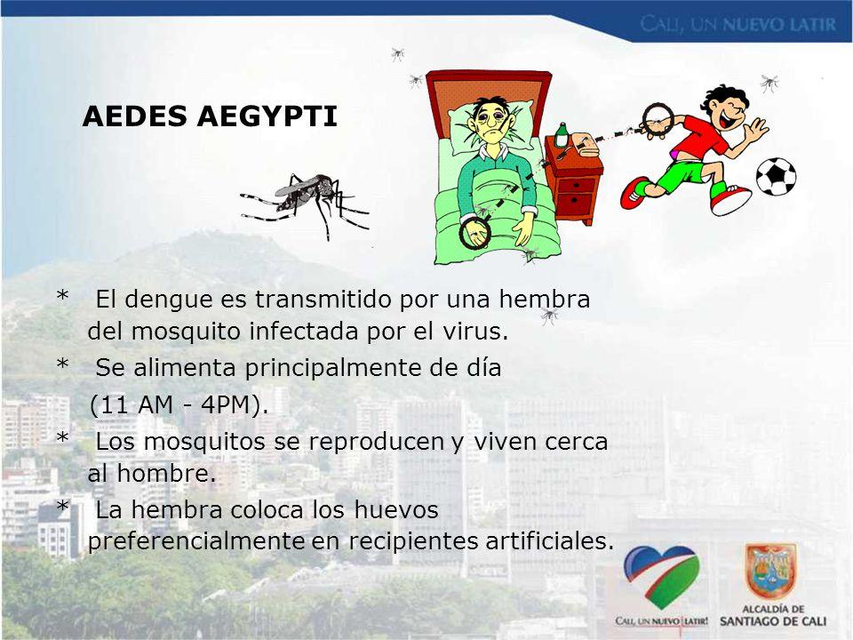 * El dengue es transmitido por una hembra del mosquito infectada por el virus. * Se alimenta principalmente de día (11 AM - 4PM). * Los mosquitos se r