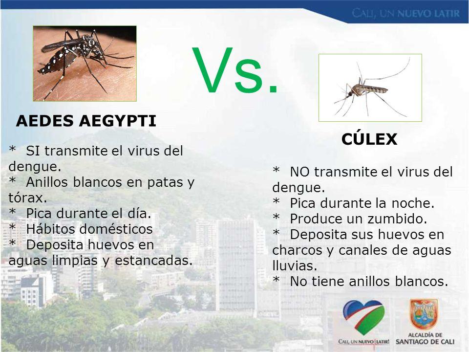 * NO transmite el virus del dengue. * Pica durante la noche. * Produce un zumbido. * Deposita sus huevos en charcos y canales de aguas lluvias. * No t