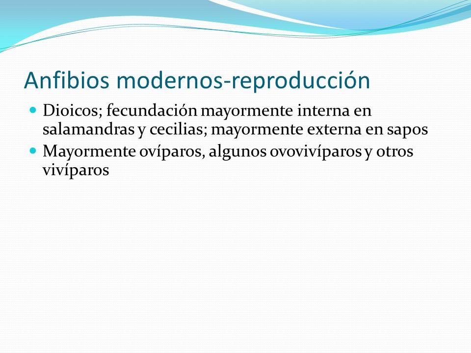 Anfibios modernos-reproducción Dioicos; fecundación mayormente interna en salamandras y cecilias; mayormente externa en sapos Mayormente ovíparos, alg